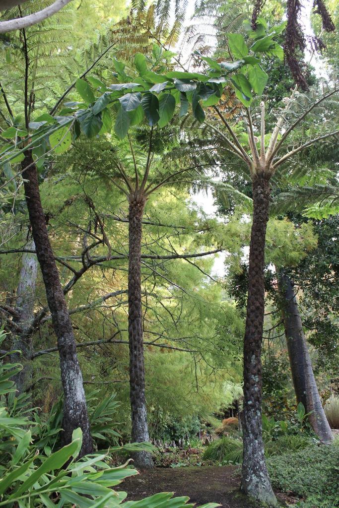Cypress  and Bog Pond
