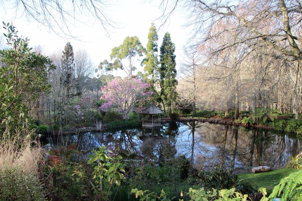 Cypress Pond Winter 2017